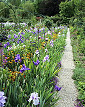 Jardin Monet Giverny Iris MAP ADE GIP0014945