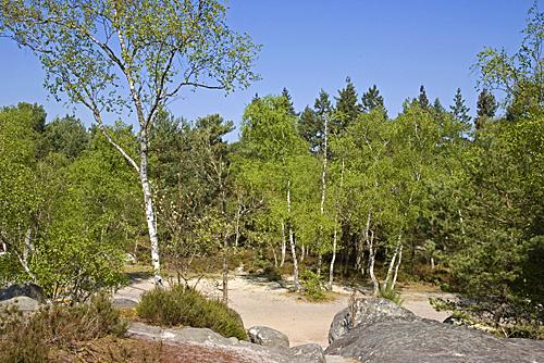 Foret Fontainebleau Vegetation MAP AGU 130926036