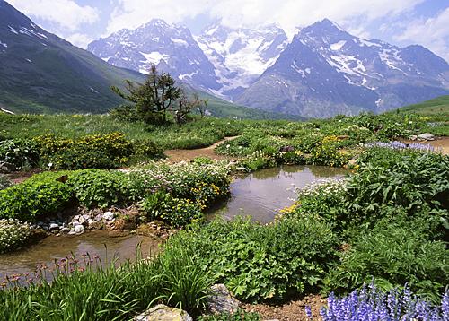 Montagne Lautaret Paysage MAP NPM GIP0071756