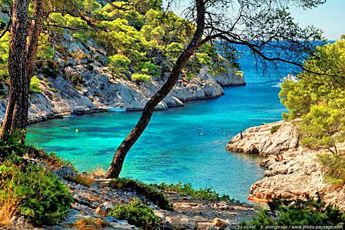Paysage littoral France Vegetation