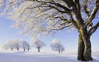 frozen-trees-wallpaper-34219-34988-hd-wallpapers