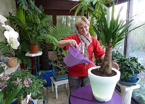 Rempotage yucca Arrosage Mioulane Photogreen P1070193