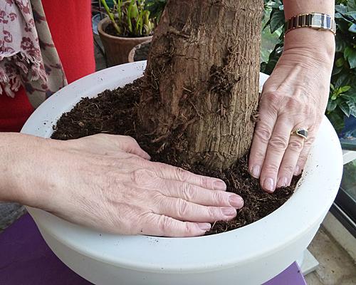 Rempotage yucca Tassage Mioulane Photogreen P1070188