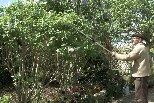 Taille Lilas Equilibrage NewsJardinTV