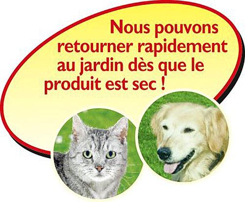 Logo chien chat Finalsan