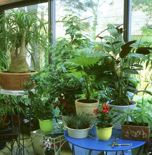 Veranda Plantes Mioulane MAP NPM GIP0093081