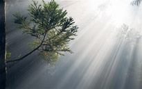 Plante lumiere Photosynthese Flora