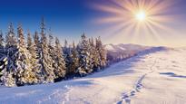 Soleil hiver Flora