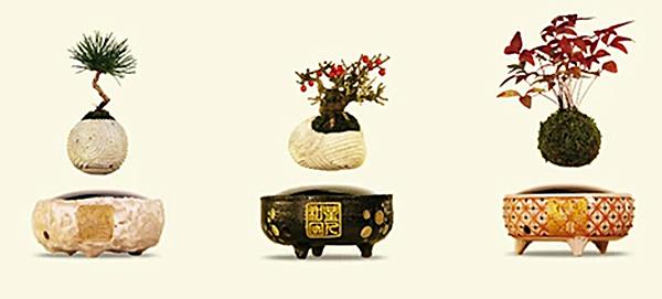 Bonsai Levitation Collection