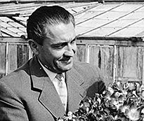 Francis Meilland Cocktail 1957