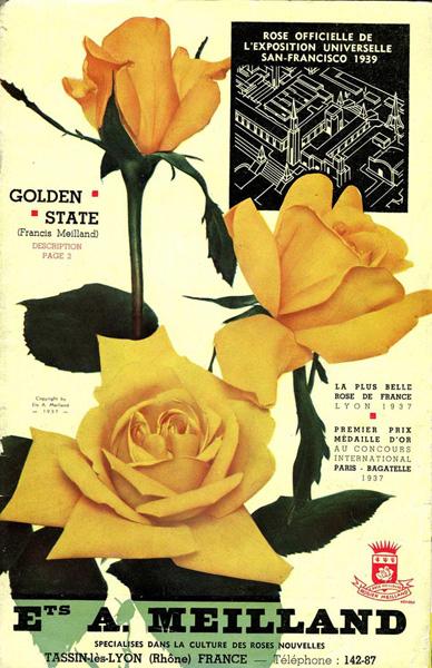 Meilland golden state