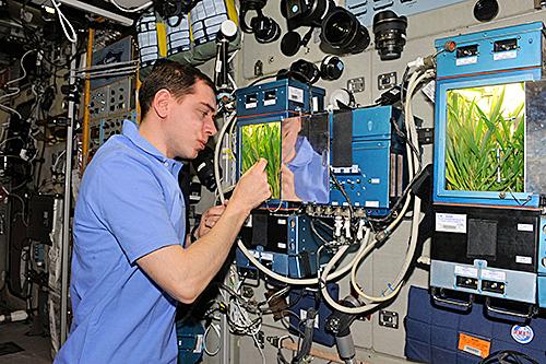 Veggie ISS Nasa