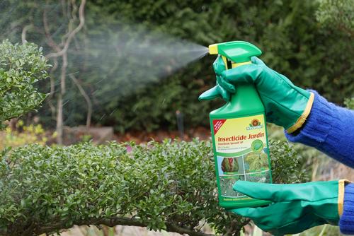 Traitement Insecticide Jardin Neudorff Mioulane NewsJardinTV P1040346