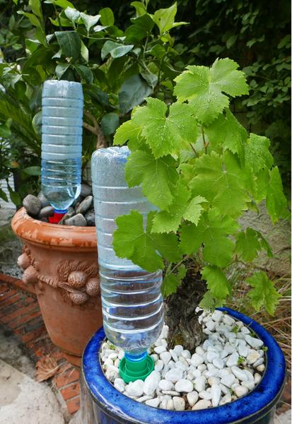 Aquasolo vert vigne Mioulane NewsJardinTV P1010832
