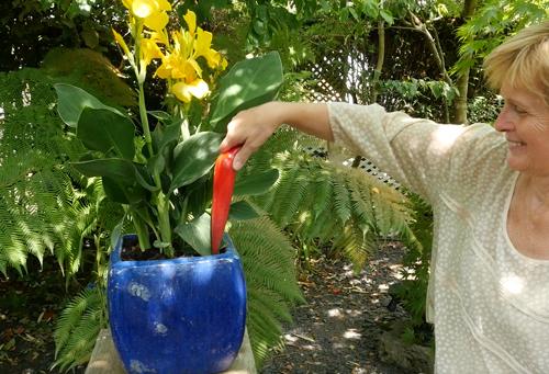 Plantoir Pot Canna Nicole Mioulane NewsJardinTV