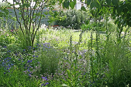Jardin sauvage prairie fleurie Mioulane NewsJa