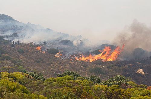 Feu Fynbos Afrique du Sud