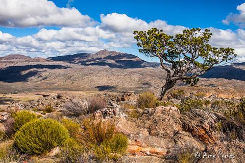 Paysage Cederberg Afrique du Sud