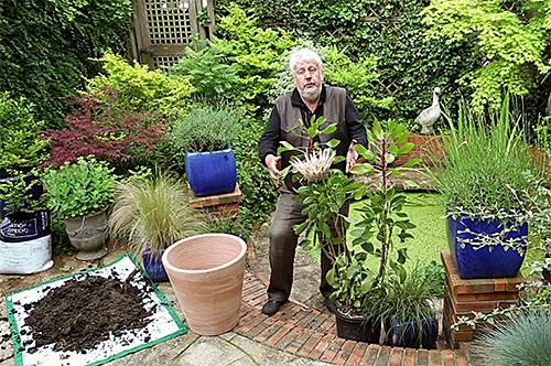 Protea cynaroides Rempotage Mioulane NewsjardinTV