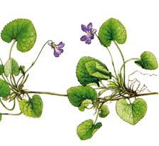 Gravure Violette 869