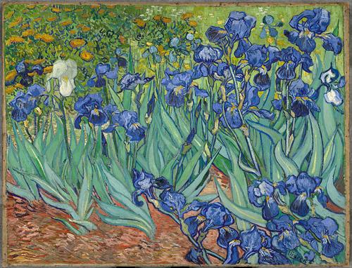 Iris Vincent van Gogh