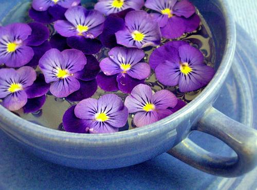 Violette infusion Flora