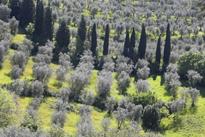 Toscane Cypres Olivier Mioulane MAP NPM 719510485