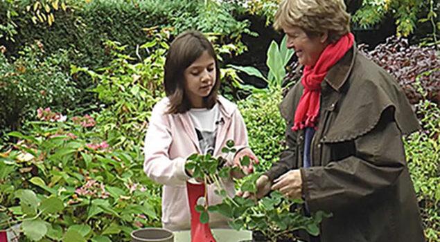 Plantation Fraisier Mioulane NewsJardinTV