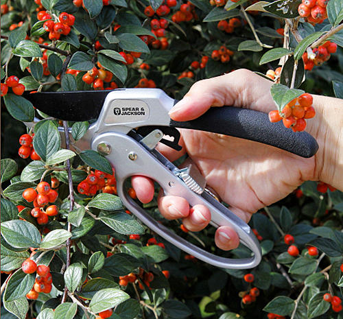 Taille cotoneaster MAP PAMI 850457106