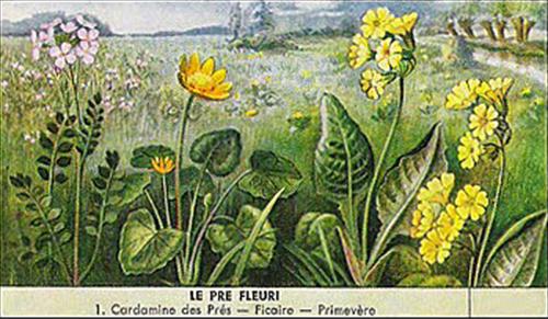 Prairie fleurie Octave Mirbeau