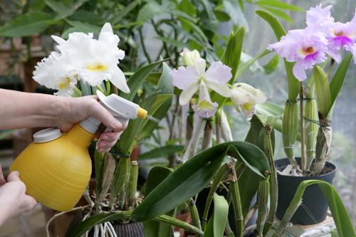 Vaporisation Orchidee Mioulane MAP NPM 100305565