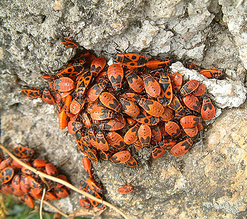 Gendarmes insectes Groupe