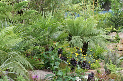 Jardin exotique Palmier Cycas Mioulane NewsJardinTV NPM 060522041