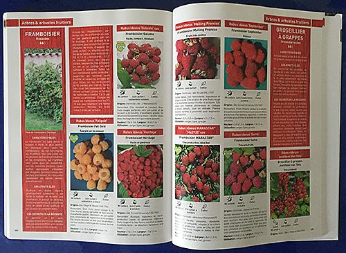 Guide Minier Mioulane NewsJardinTV Fruits IMG 2537