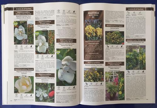 Guide Minier Mioulane NewsJardinTV Magnolia IMG 2519