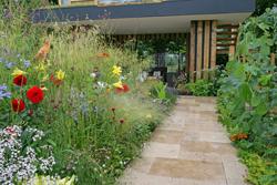 Jardin urbain Sauvage Mioulane NewsJardinTV NPM 2507528837