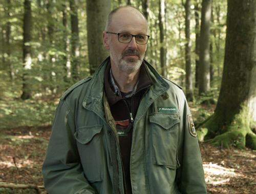 Vie secrete arbres Auteur Peter Wohlleben