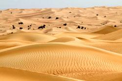 Desert Dubai Mioulane NewsJardinTV NPM 90180669