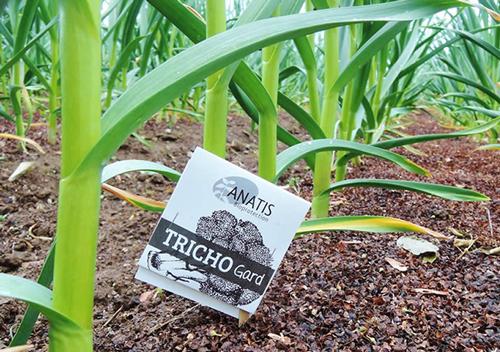 trichogramme poireau Protection biologique