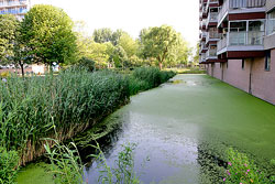 Canal Bassin Ville Mioulane NewsJardinTV NPM 850327393