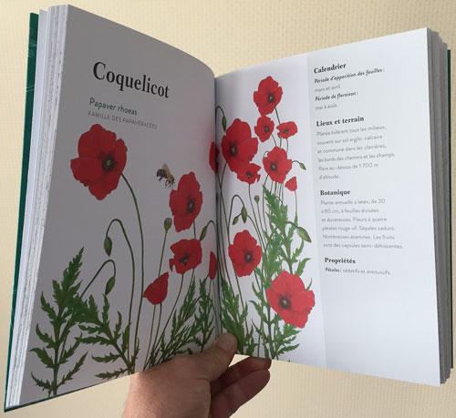 Coquelicot IMG 3221