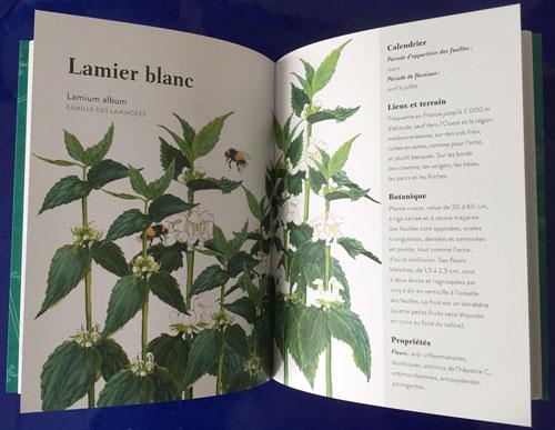 Lamier blanc IMG 3220