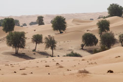 Desert Vegetation Mioulane NewsJardinTV NPM 90180650