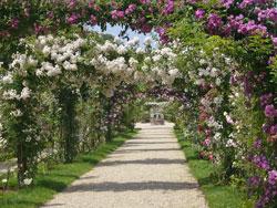 Roseraie LHay Val de Marne Flora