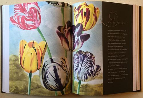 18 Siecle Flora Allegoria Mioulane NewsJardinTV IMG 4131