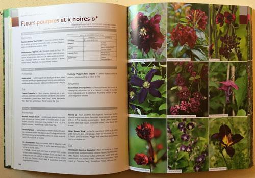 Fleurs noires Mioulane NewsJardinTV IMG 4151