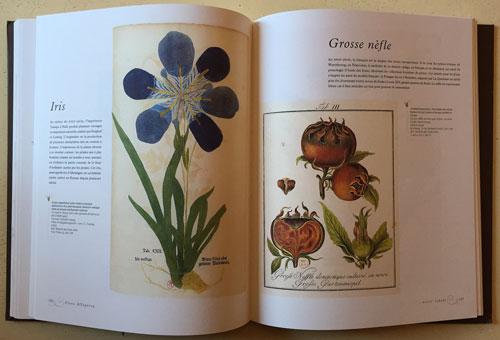 Iris NefleFlora Allegoria Mioulane NewsJardinTV 7164852