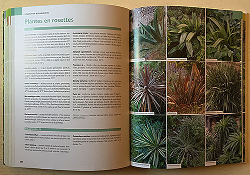 Plantes Rosettes Mioulane NewsJardinTV IMG 4150