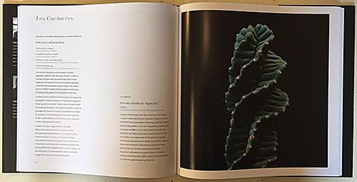 Succulentes Cactaceae NewsJardinTV IMG 4208