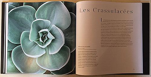 Suculentes Crassulaceae NewsJardinTV IMG 4210 1